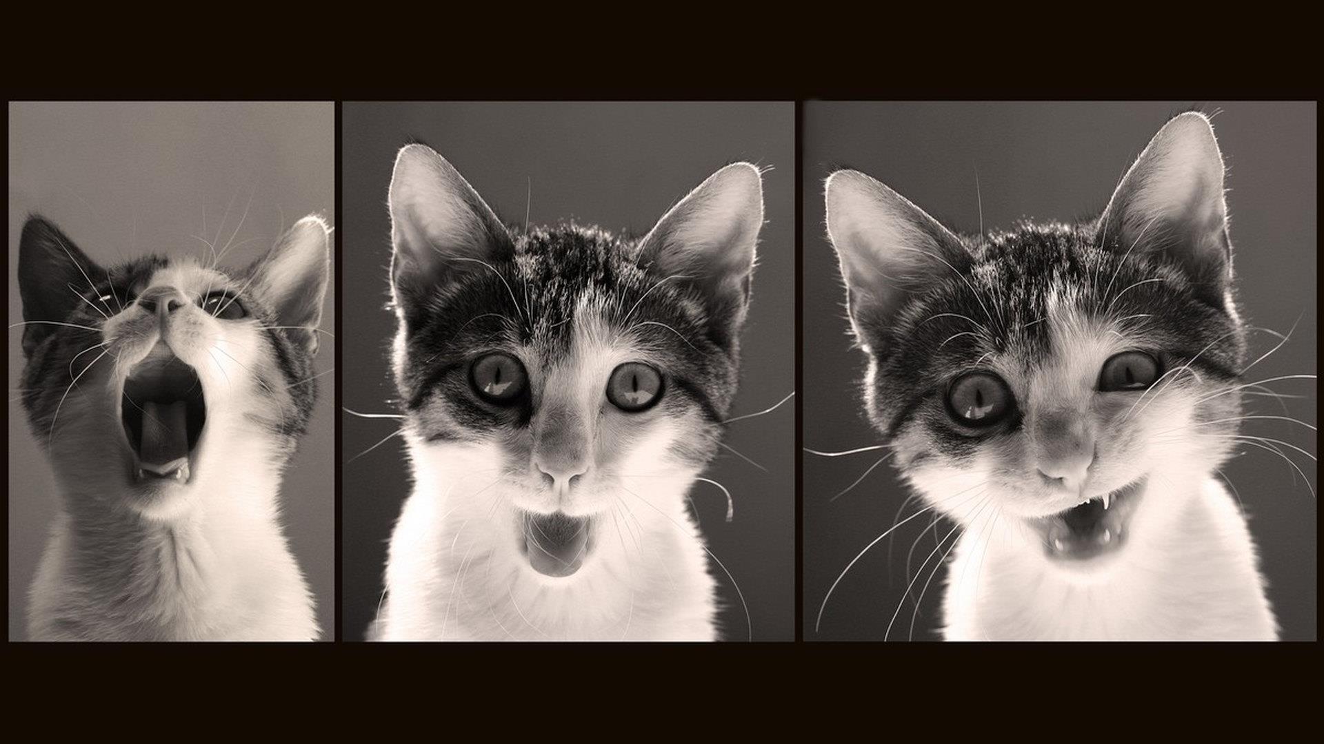 fotografare gli animali domestici