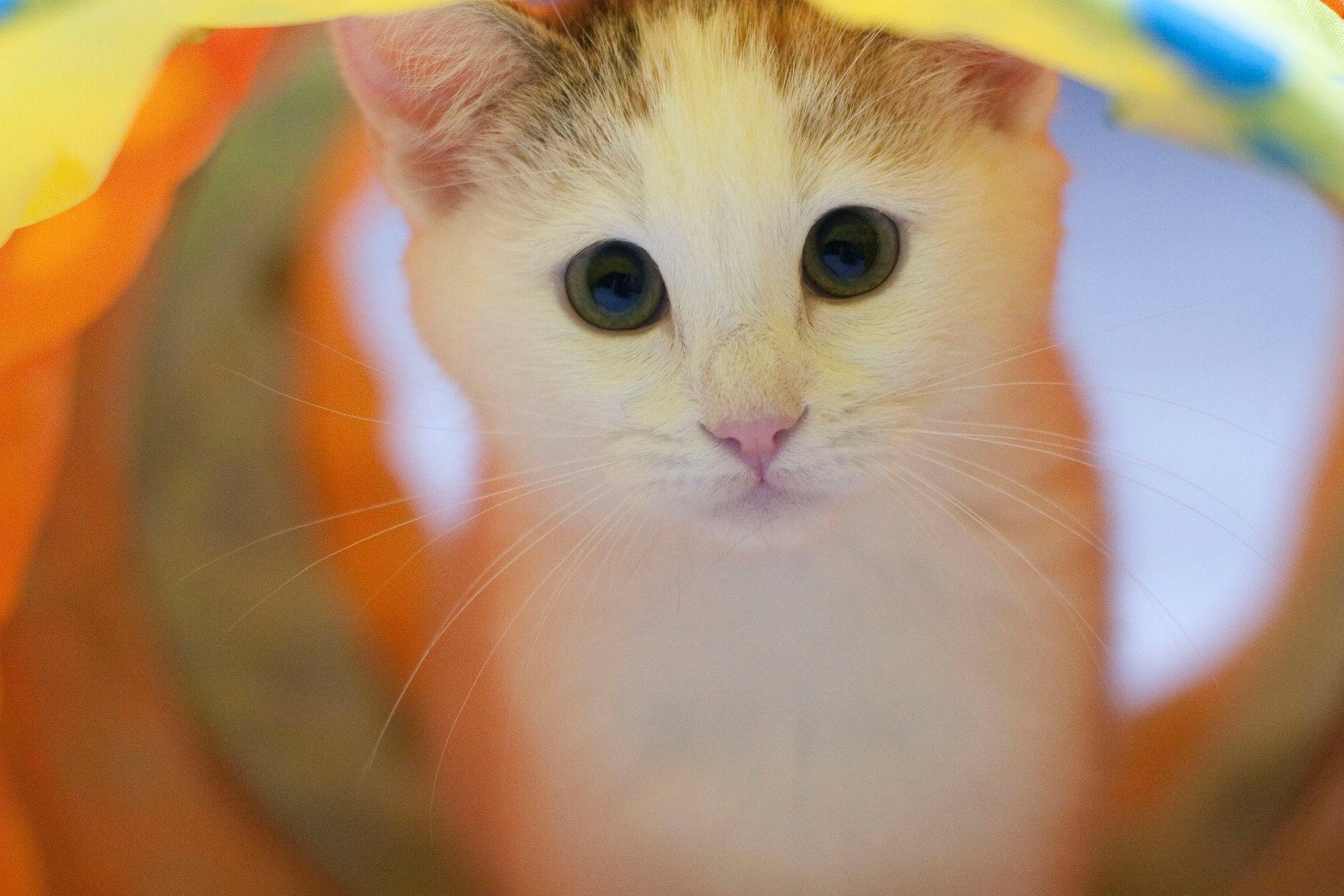 Fotografare animali domestici